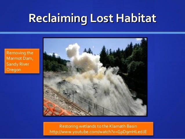 Reclaiming Lost HabitatReclaiming Lost Habitat 49 Restoring wetlands to the Klamath Basin http://www.youtube.com/watch?v=G...