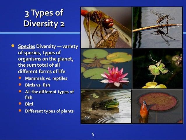 3Types of3Types of Diversity 2Diversity 2  SpeciesSpecies Diversity — varietyDiversity — variety of species, types ofof s...