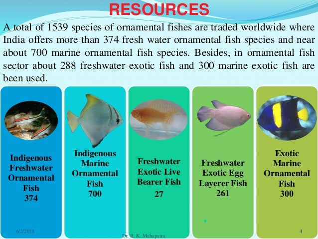 Biodiversity Of Ornamental Fish In India Issues Of Sustainability And