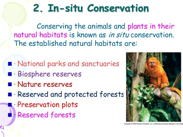 why endangered species should be protected essay This chapter will discuss the protection of other species by humans, mainly in the  usa the protective legislation inspired by the wanton destruction of wildlife in.