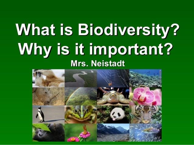 What is Biodiversity?What is Biodiversity?Why is it important?Why is it important?Mrs. NeistadtMrs. Neistadt