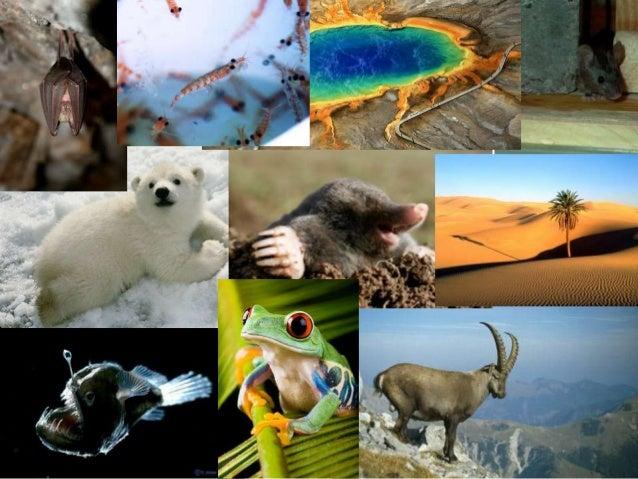 Raznovrsnost gena (genetički biodiverzitet) • Raznovrsnost između jedinki iste vrste. • Svaka jedinka na planeti ima jedin...