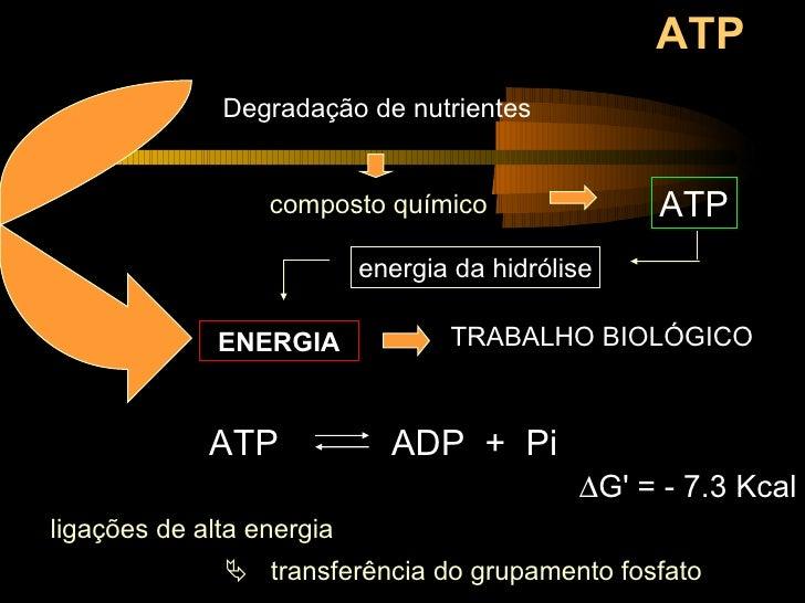 ATP Degradação de nutrientes ENERGIA ATP   ADP  +  Pi   G' = - 7.3 Kcal    transferência do grupamento fosfato ligações ...