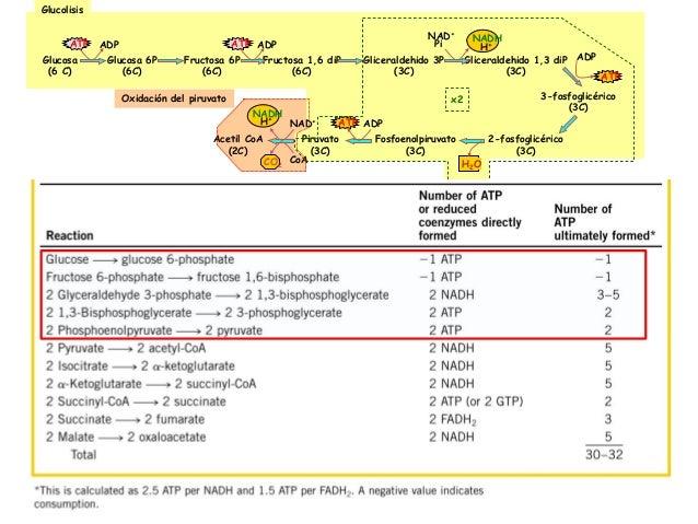 Bioenergetica y glucolosis