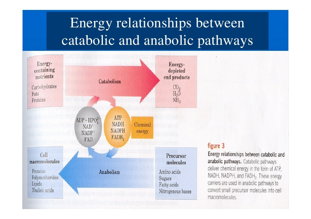 relationship between bioenergetics and thermodynamics tables