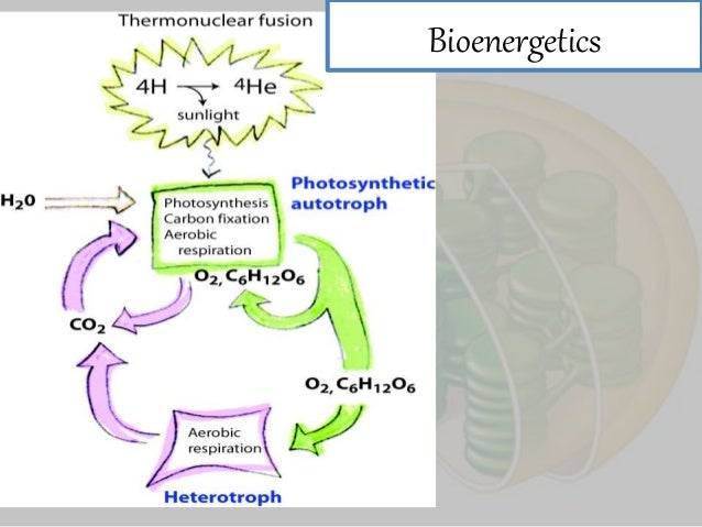 Bioenergetics, metabolism and enzymes