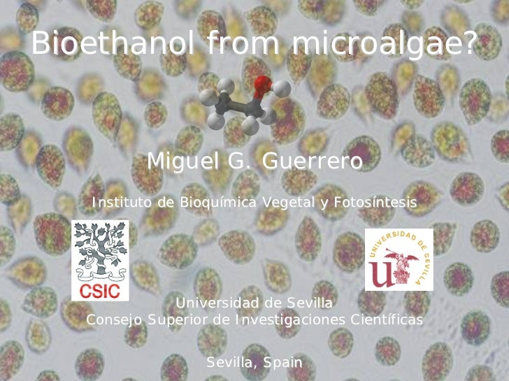 Bioethanol from microalgae?              Miguel G. Guerrero    Instituto de Bioquímica Vegetal y Fotosíntesis             ...