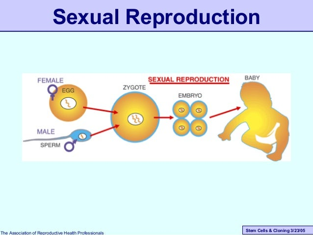 Stem Cells & Cloning 3/23/05 Sexual Reproduction The Association of Reproductive Health Professionals