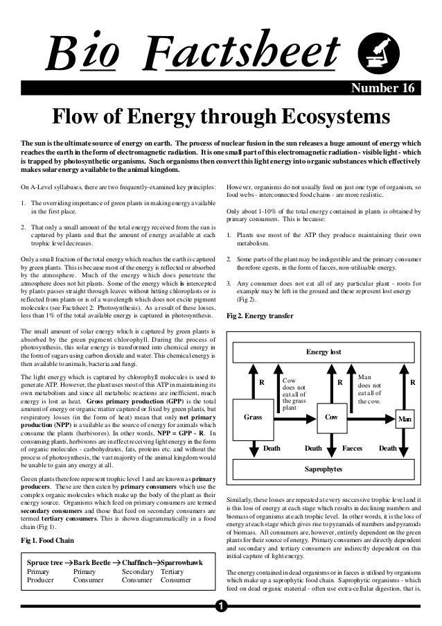 Biofactsheet flowofenergy