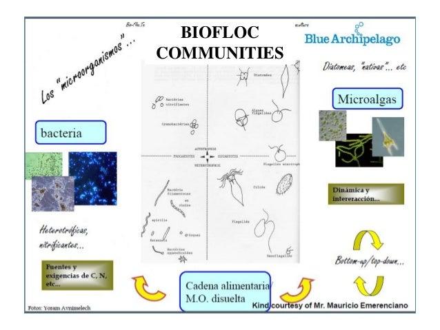 Biofloc information