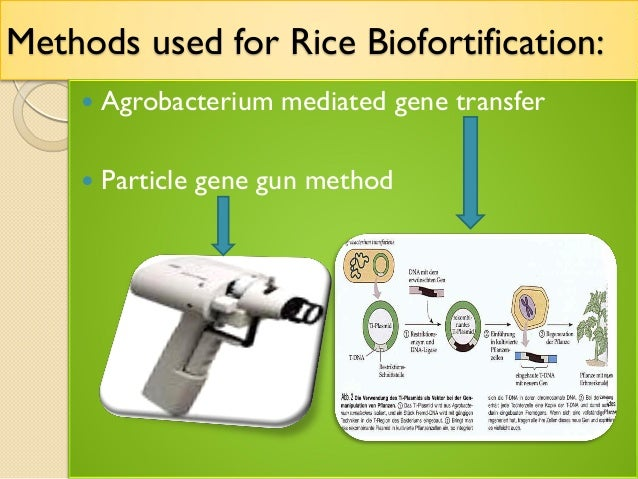 gene transfer using agrobacterium biology essay Development of t-dna essay a+ pages:  (1993): agrobacterium mediated gene transfer by infiltration of adult  cell biology of agrobacterium infection and .