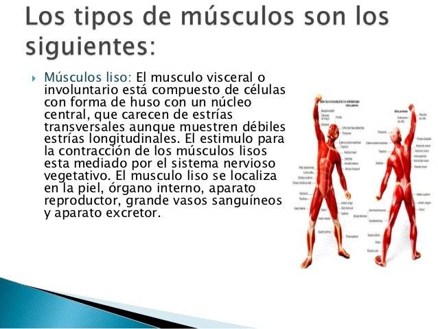 Biofísica muscular