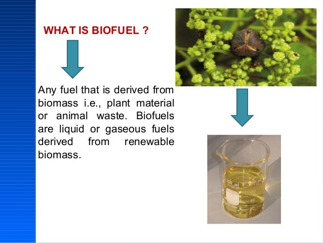 algae should not be the future biofuel Figure 13: delphi survey results about the future of microalgae biofuels   advanced technologies that do not appear to be yet commercially viable.