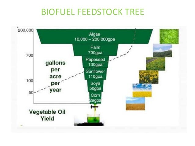 Algae biofuel business plan pdf
