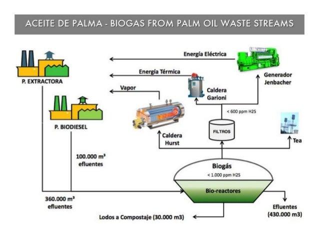 ACEITE DE PALMA — BIOGAS FROM PALM OIL WASTE STREAMS                  Energta Elécttica   <  Energla Térmlca  P.  BIODIESE...