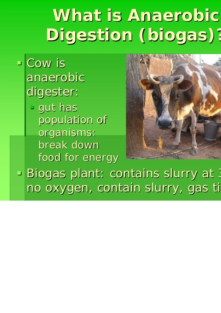 biogas cow - photo #18
