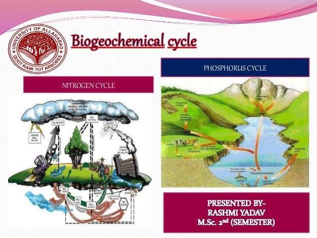PHOSPHORUS CYCLE NITROGEN CYCLE