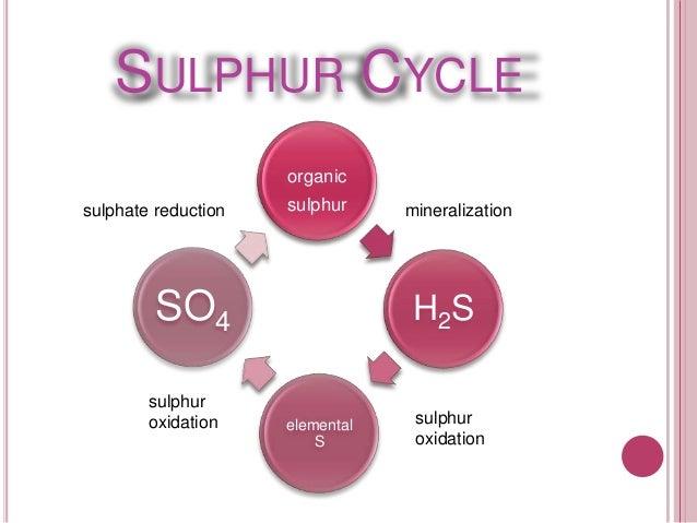 Essay on biogeochemical cycle