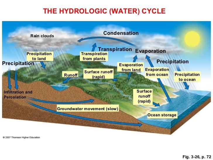 Biogeochemical cycles – Phosphorus Cycle Worksheet