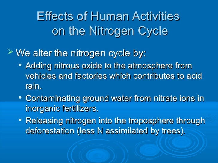 Nitrogen Cycle Essays