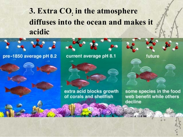 what are the steps of the carbon cycle