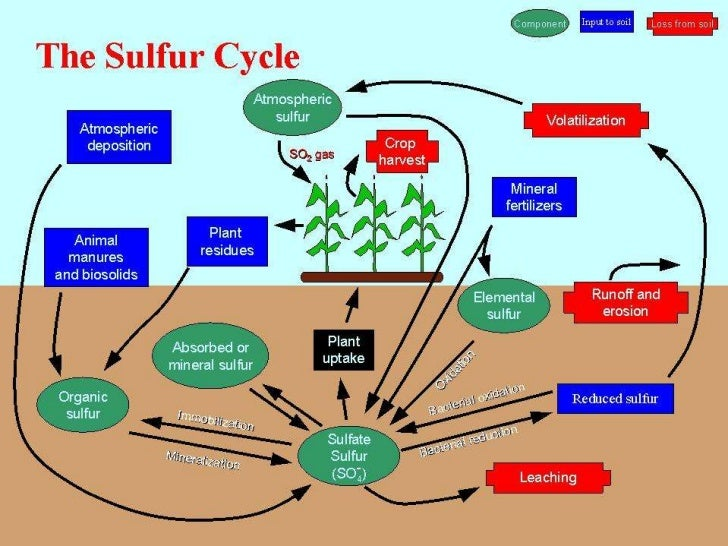 biogeochemical cycle definition
