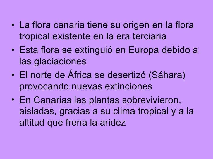 <ul><li>La flora canaria tiene su origen en la flora tropical existente en la era terciaria </li></ul><ul><li>Esta flora s...