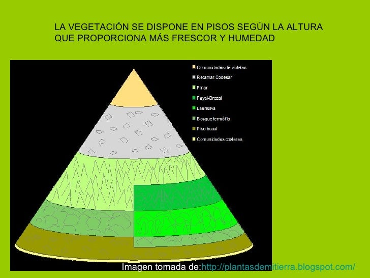 LA VEGETACIÓN SE DISPONE EN PISOS SEGÚN LA ALTURA QUE PROPORCIONA MÁS FRESCOR Y HUMEDAD Imagen tomada de: http :// plantas...