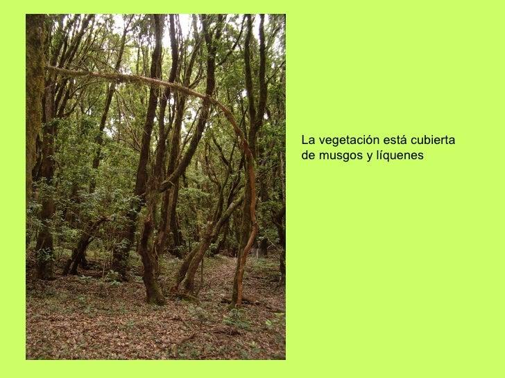 La vegetación está cubierta de musgos y líquenes