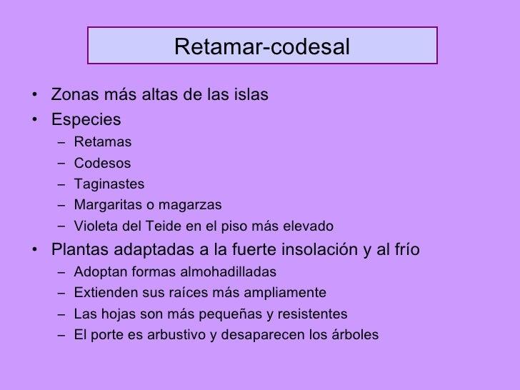 Retamar-codesal <ul><li>Zonas más altas de las islas </li></ul><ul><li>Especies </li></ul><ul><ul><li>Retamas </li></ul></...