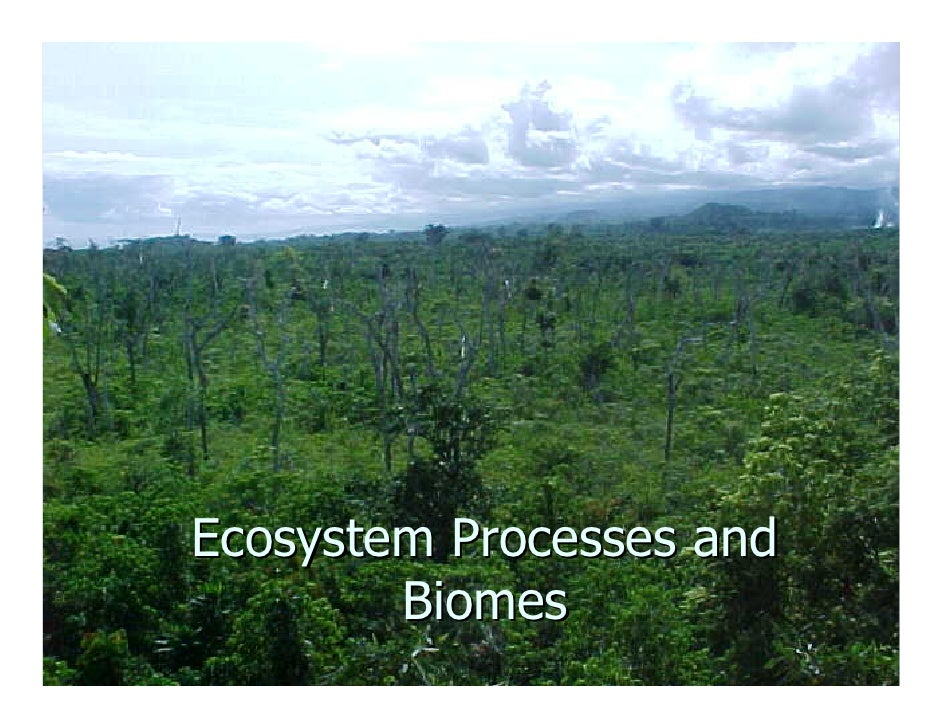 Ecosystem Processes and         Biomes
