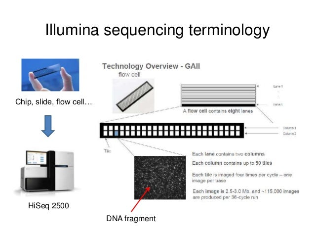 Next Generation Sequencing Data Format And Visualization