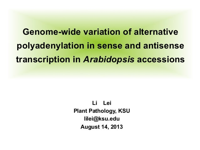 Genome-wide variation of alternative polyadenylation in sense and antisense transcription in Arabidopsis accessions	    Li...