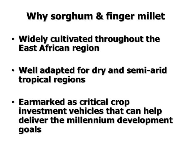 Improving production potential of sorghum and finger
