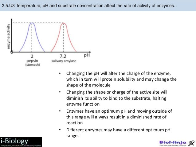 investigation 13 enzyme activity Depending on the shapes and structures of the enzymes, the function could change drastically therefore, the activity of the enzyme varies according to ph in investigation lab 13 introduction.
