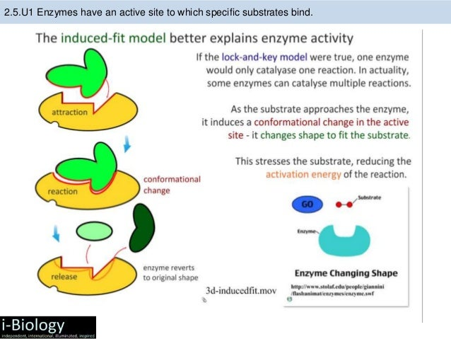 how to tell when substrate is dissolved from enzyme