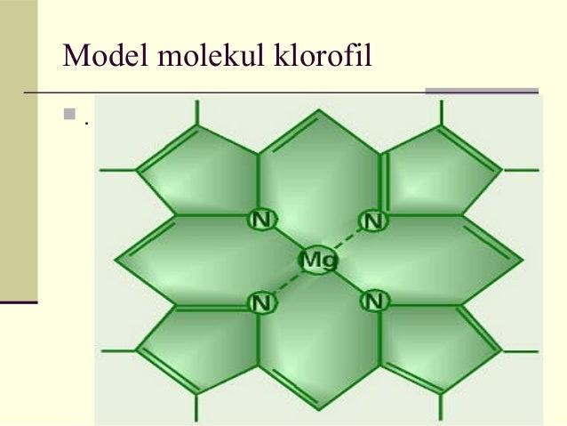 Biokimia Ii Fotosintesis