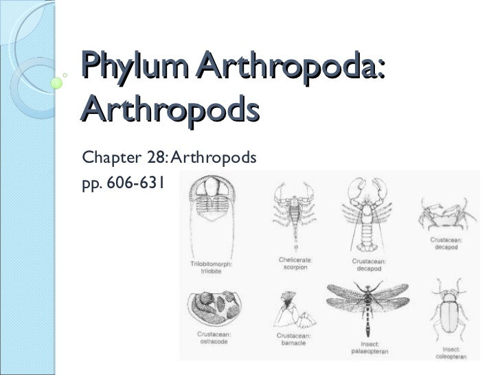 Phylum Arthropoda: Arthropods Chapter 28: Arthropods pp. 606-631