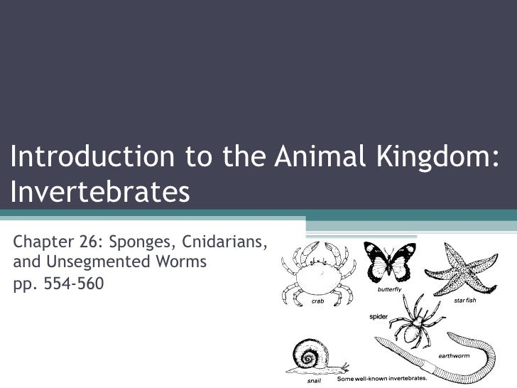 Animal Kingdom Colouring Book Chapters : Biol 11 lesson 1 feb ch 26 introduction to the animal kingdom