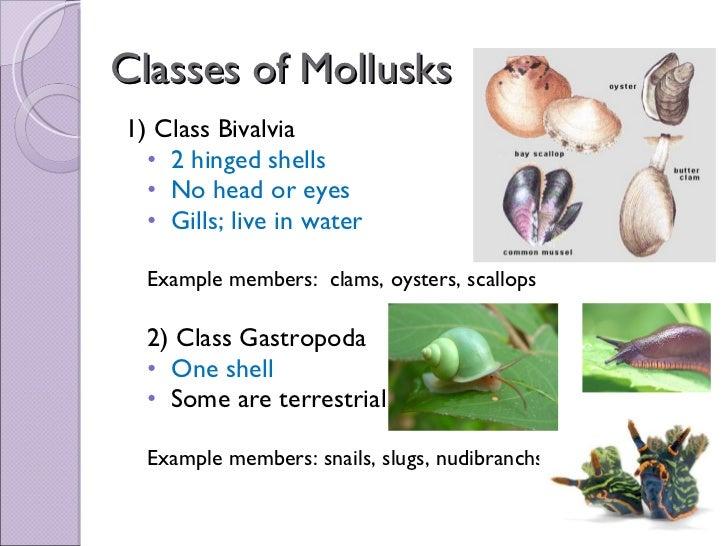 Biol 11 Lesson 1 Mar 2 Ch 27 Mollusca