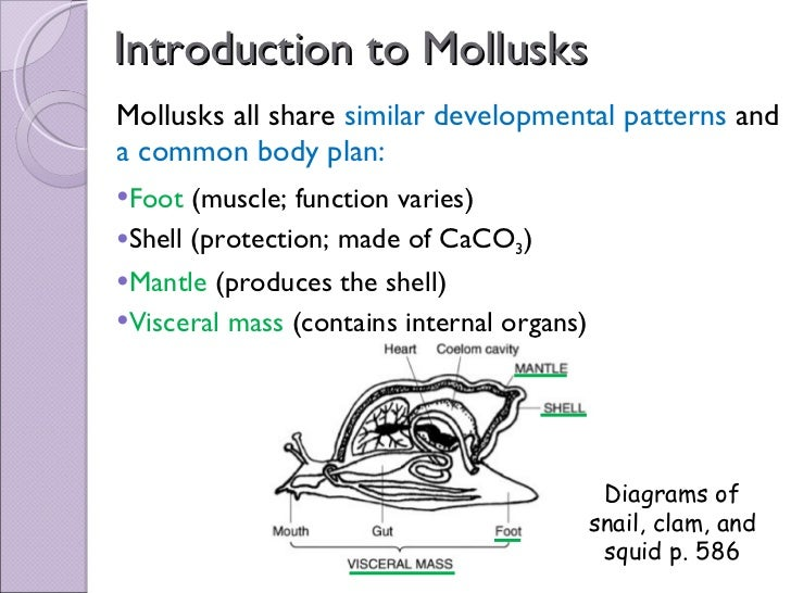 Chapter 27 Mollusks Diagram - House Wiring Diagram Symbols •