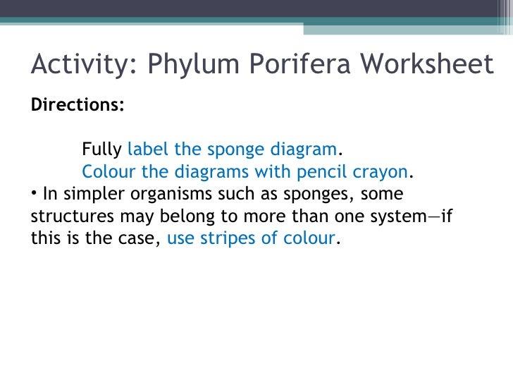 Biol 11 lesson 2 feb 3 ch 26 phylum porifera sponges 36 ccuart Choice Image