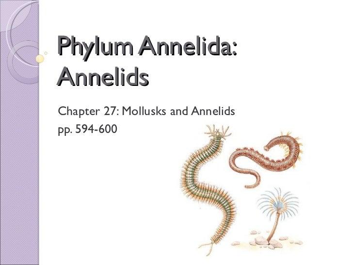 Chapter 27 Mollusks Diagram House Wiring Diagram Symbols