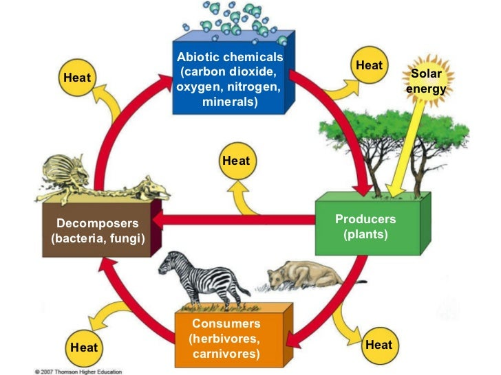 ecosystems and how they work Plants, or flora, are the primary producers of an ecosystem they absorb sunlight  and carbon dioxide (co2) from the atmosphere and use water.