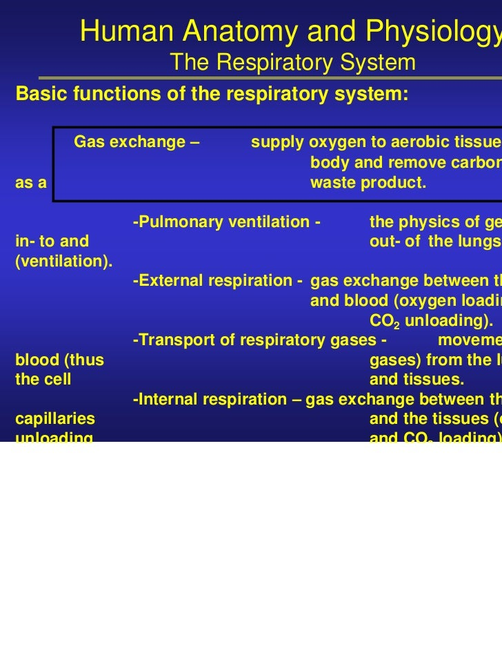 Human Anatomy and Physiology                     The Respiratory SystemBasic functions of the respiratory system:        G...