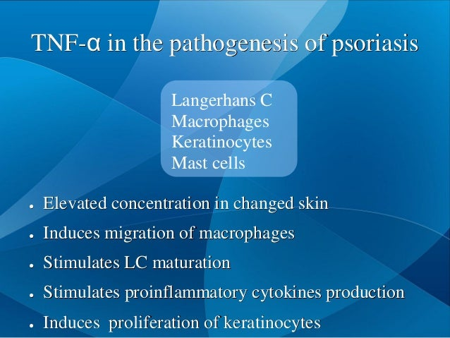 TNF-α in the pathogenesis of psoriasis Langerhans C Macrophages Keratinocytes Mast cells ● Elevated concentration in chang...