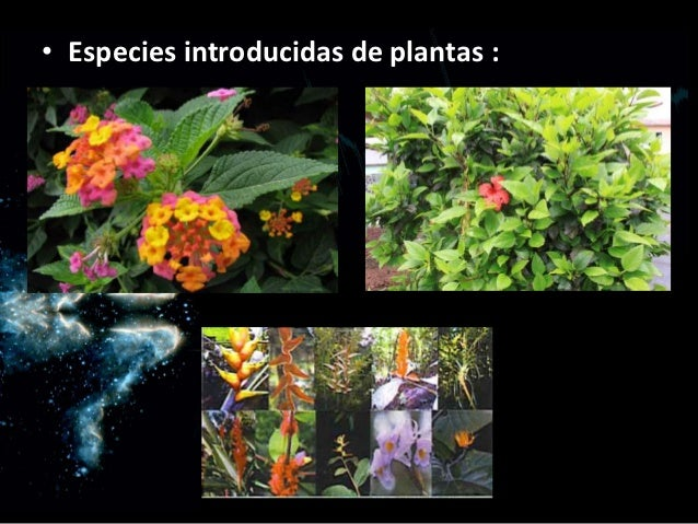 Biolog a especies del ecuador for Plantas ornamentales del ecuador