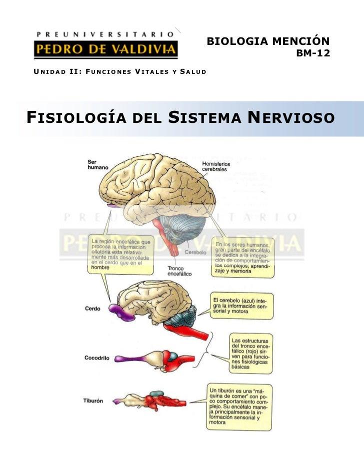 PDV: Biología Mención Guía N°12 [4° Medio] (2012)