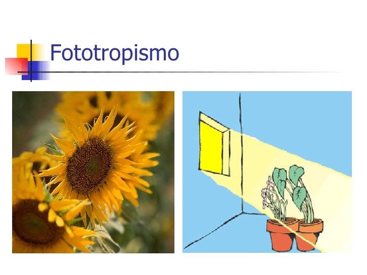 Que es fototropismo y ejemplos 86