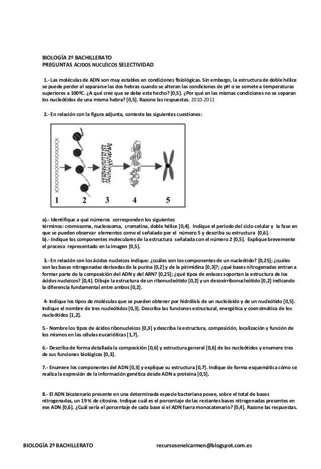 BIOLOGÍA 2º BACHILLERATO PREGUNTAS ÁCIDOS NUCLÉICOS SELECTIVIDAD 1.- Las moléculas de ADN son muy estables en condiciones ...